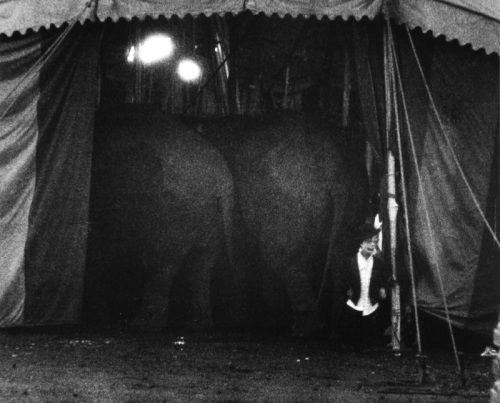 JIMMY-OUTSIDE-OF-CIRCUS-TENT-WITH-ELEPHANTS-PALISADES-NEW-JERSEY-1958-2-C30621