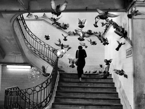 henri_cartier_bresson_photography_paris_birds_5