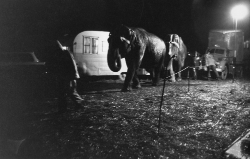 davidson-clyde-beatty-circus-elephants-at-night-1958